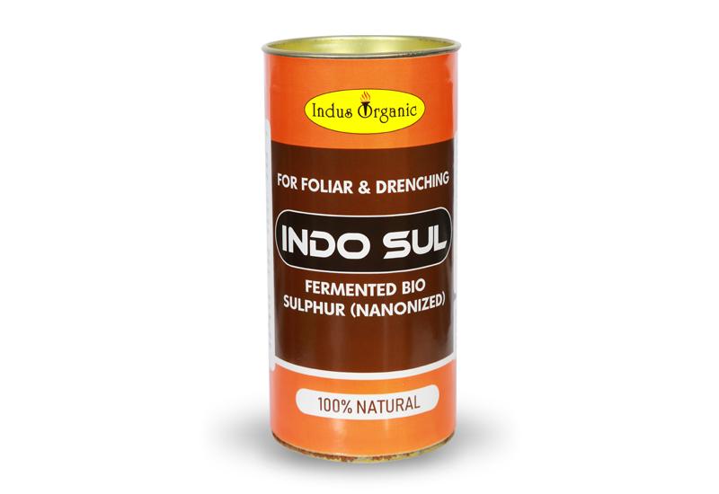 Indo Sul